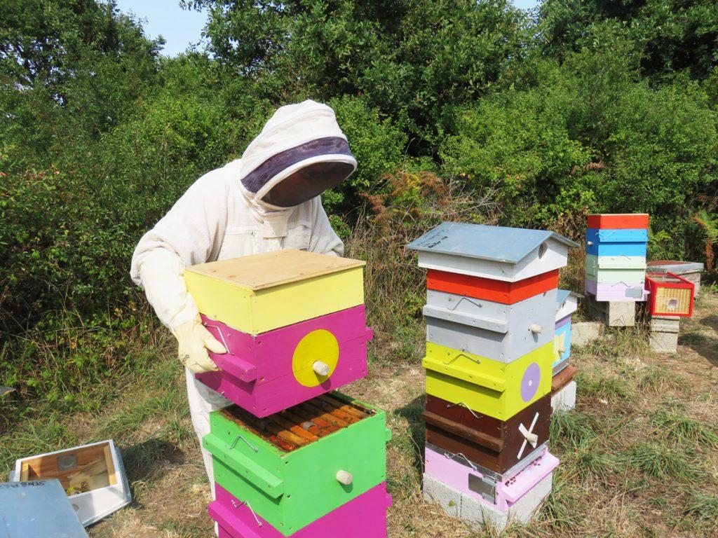 Miel de printemps : bienfaits, goût, récolte... on te dit tout !