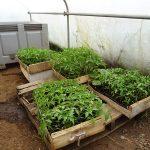 Quelques nouvelles fraîches d'Elliant et du maraîcher Au Bio Légumes !