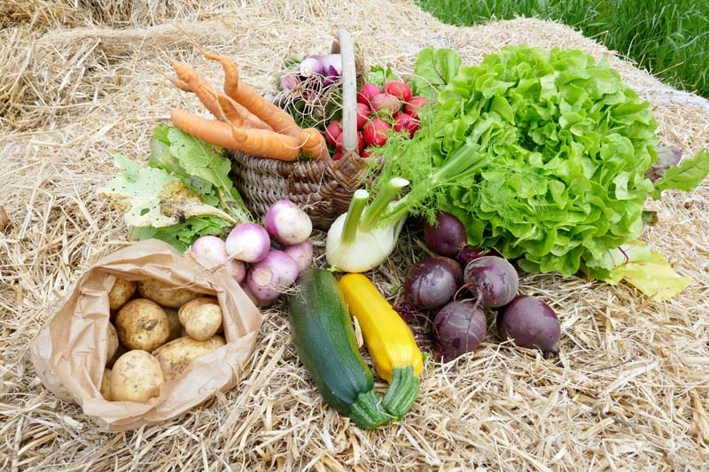 Paniers de légumes en direct du producteur : local et de saison