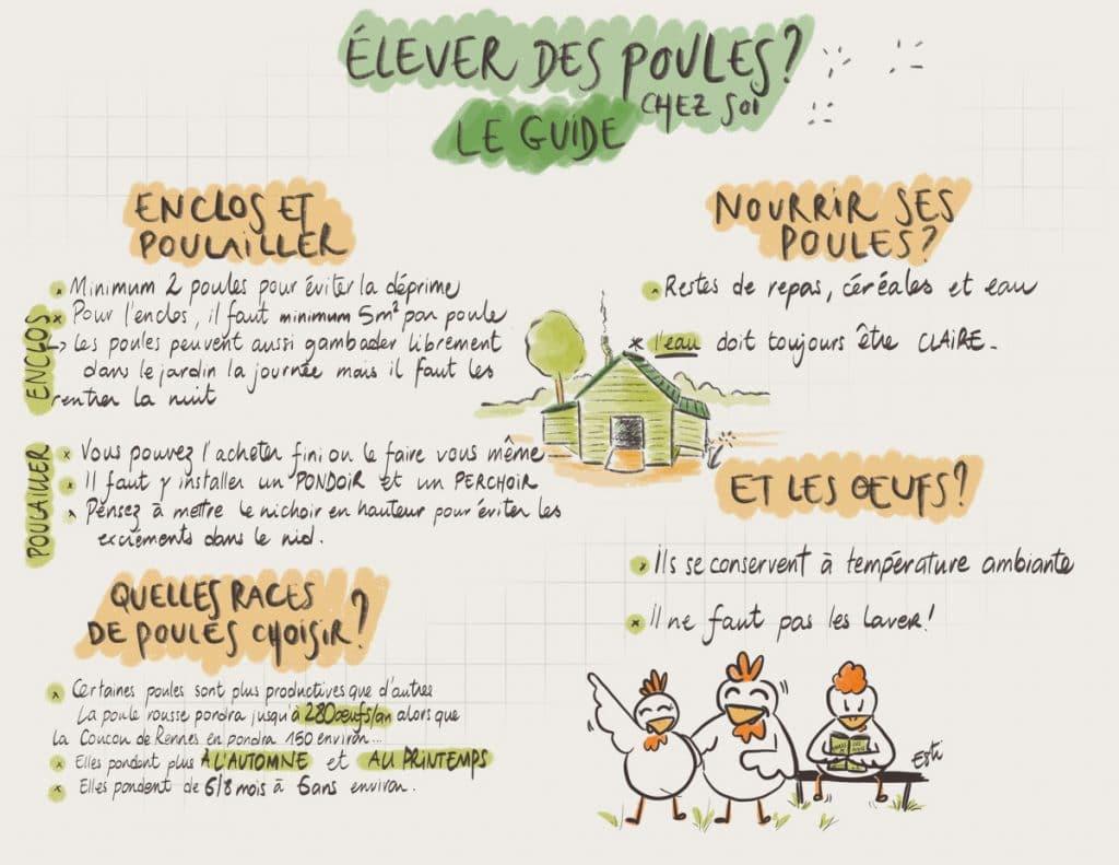 Comment élever des poules chez soi ? [GUIDE]