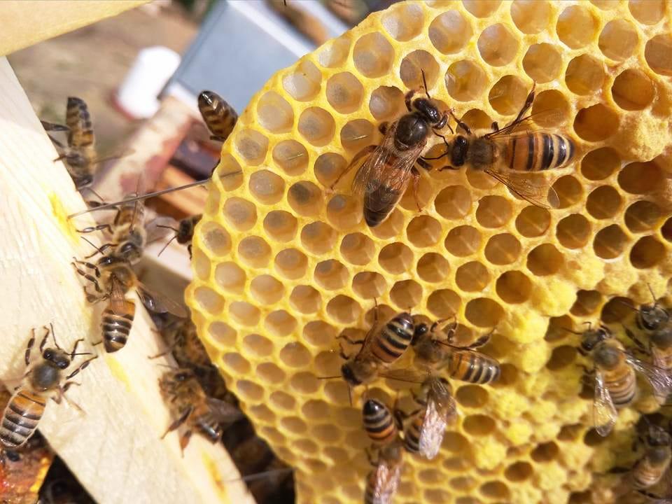 Tout savoir sur le miel : le guide pour bien choisir
