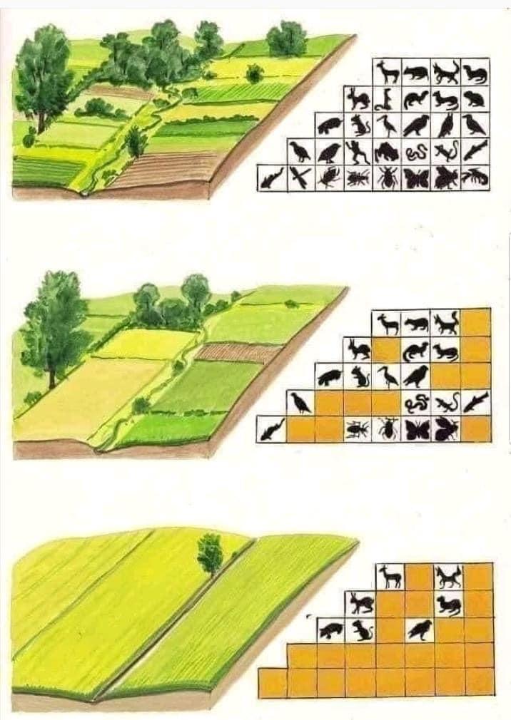 Quel est l'impact de l'agriculture sur la biodiversité et les écosystèmes ?