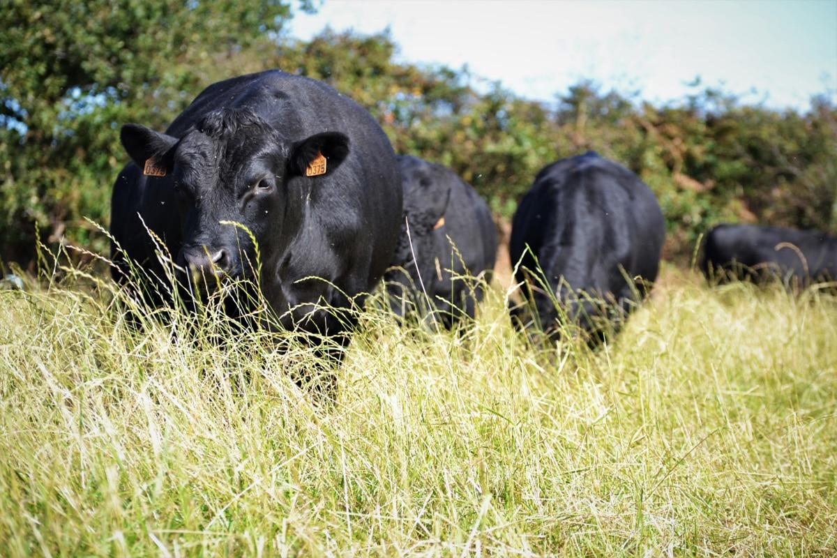 Caisse de viande de bœuf en vente directe : à quoi s'attendre ?