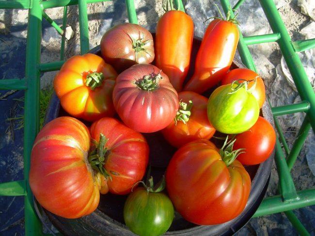 Aux Ch'Tiots Légumes