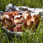 Du pain au potiron chez Barabio !