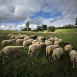 Caroline, Bergère à Laz, recherche vos projets pour un lieu collectif et rural !