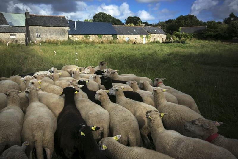 bergerie-ifs-moutons
