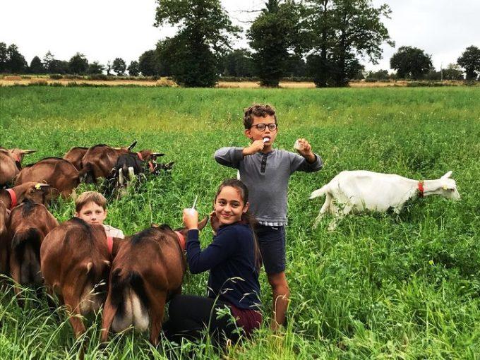 Chèvrerie Bécot - troupeau de chèvres