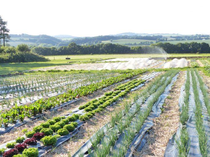 Ferme de la Clef des Garennes - cultures de légumes en plein air