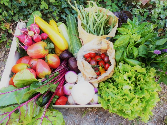 Ferme de la Clef des Garennes - panier de légumes