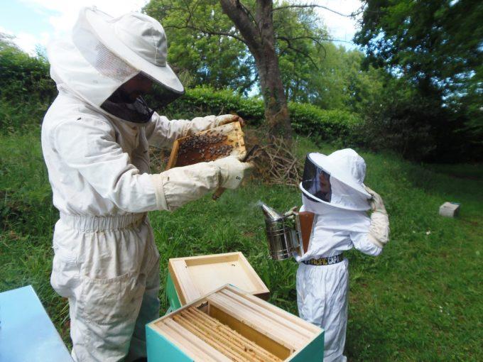 Rucher Melen ha Du - autour des ruches