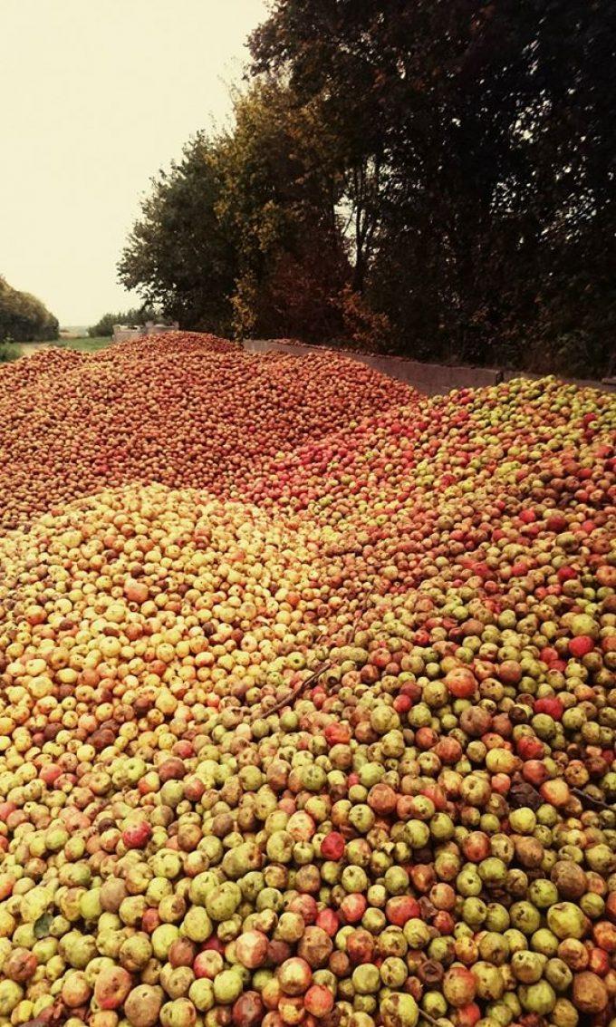 Cidrerie Kerloîck - montagne de pommes à cidre