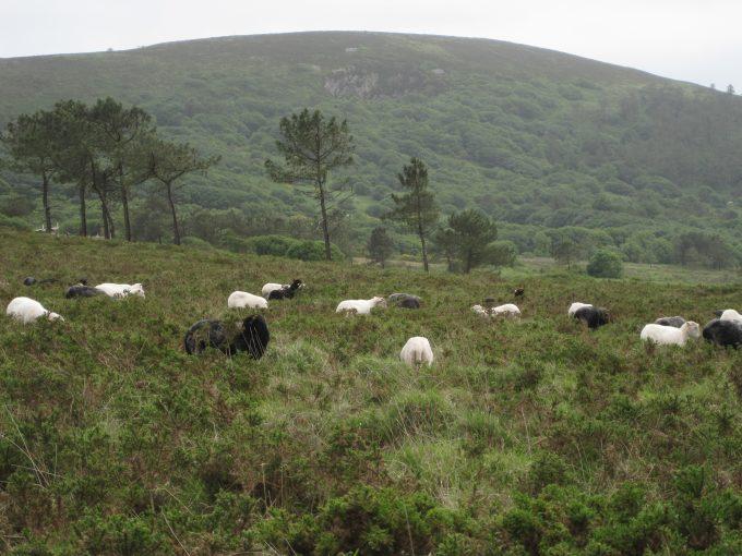 Des moutons au grand air !