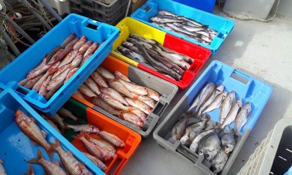 Quels sont les poissons, coquillages et crustacés de saison ? [GUIDE]