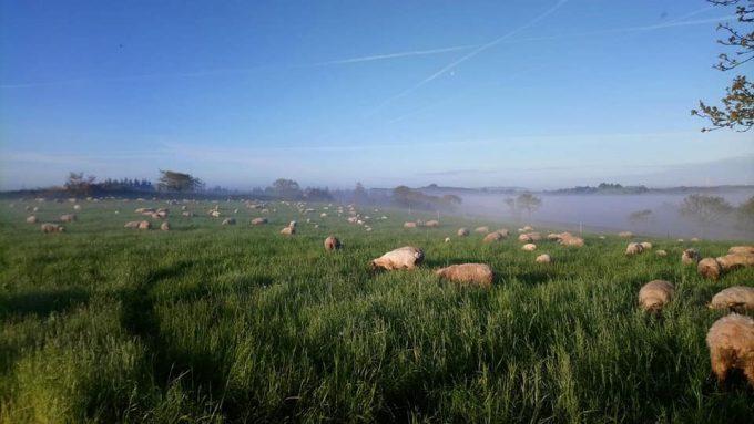 La Bergerie de Bulat - brebis et agneaux nourris à l'herbe