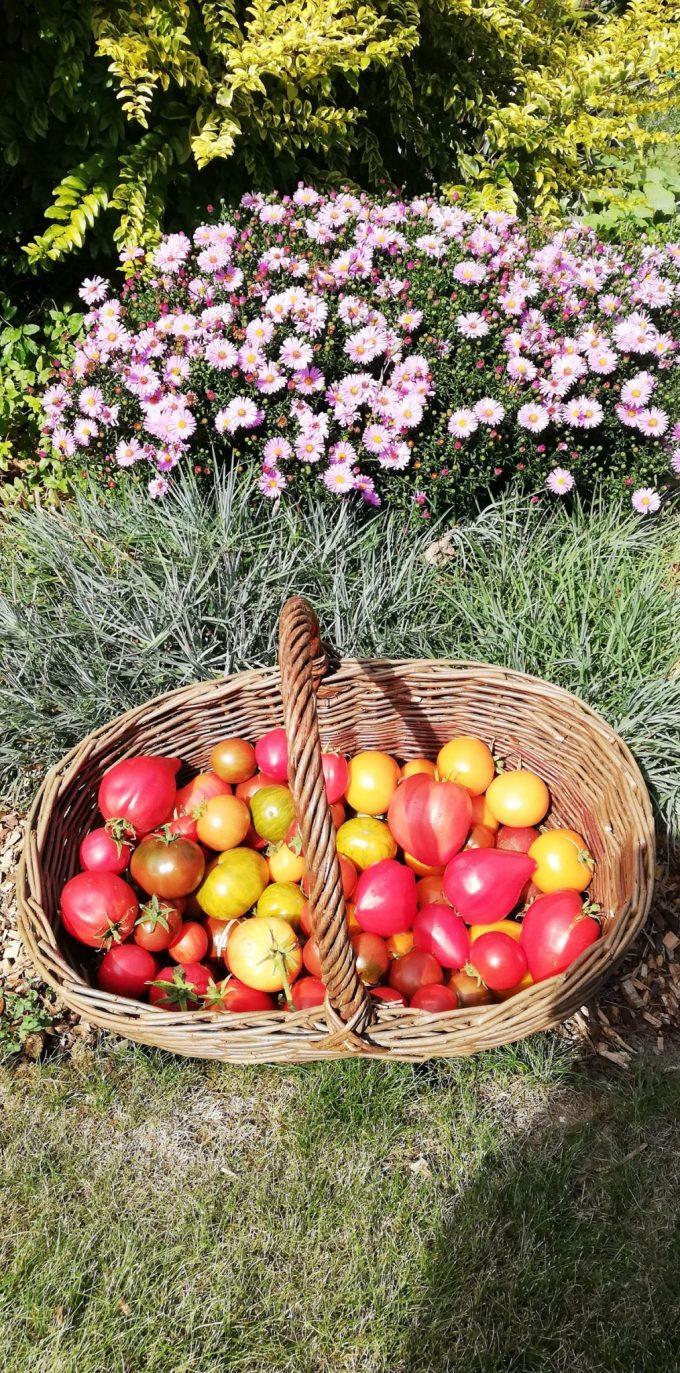 Ty Tropik - fruits et fleurs comestibles