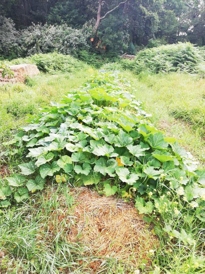 Ty Tropik - permaculture