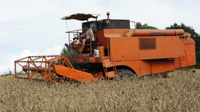 Atelier des Pains - récolte des céréales