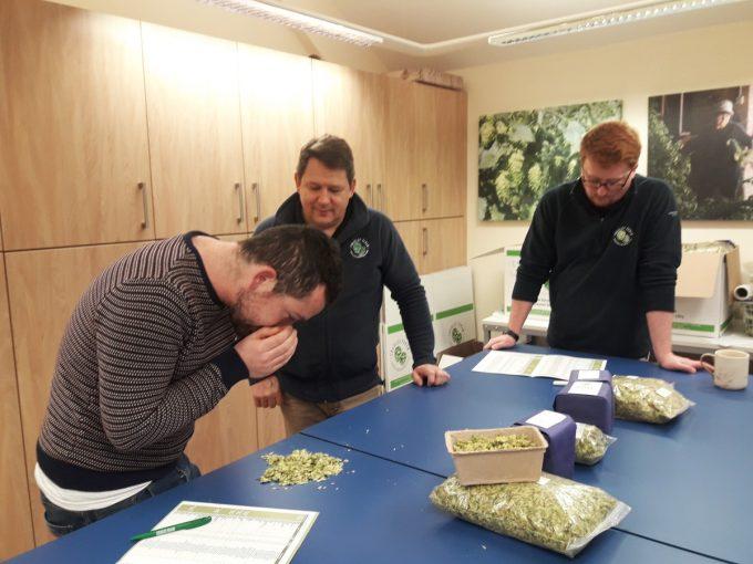 Brasserie Brittany's - examen du houblon