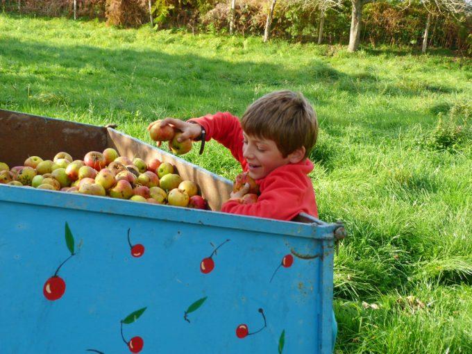 Entre Pomme et Sureau - chacun ramasse