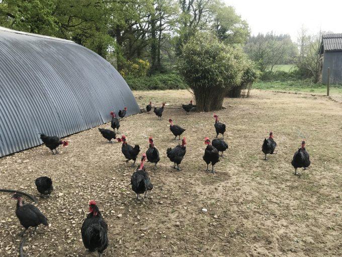 Ferme de Kerouatz - poulets et pintades de plein air