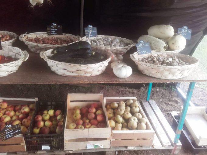 La Ferme de Saint Daniel - large choix de beaux légumes