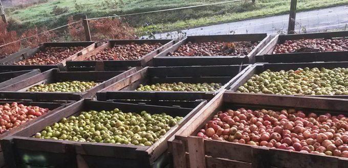 Le Bois du Barde - pommes