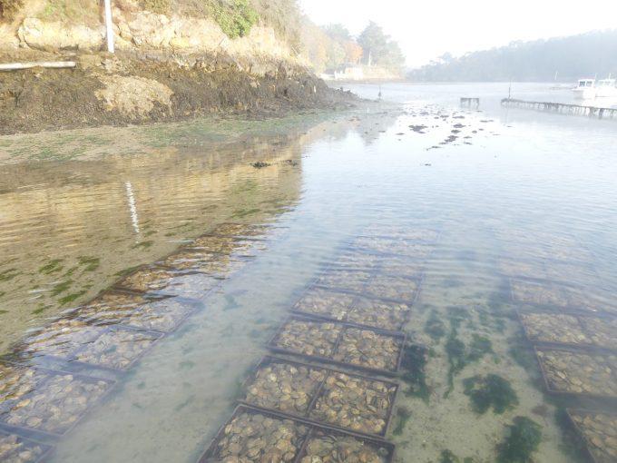 Les Viviers du Belon - huîtres en eau