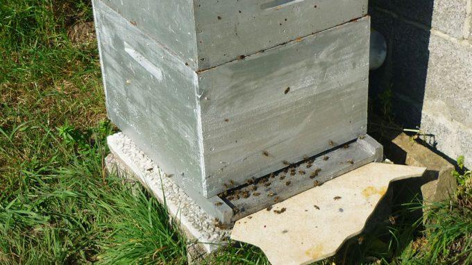 Le Rucher de la Baie - ruche