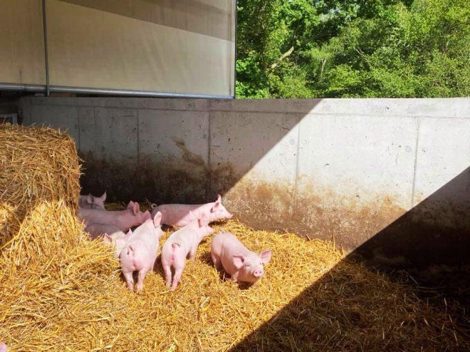 Au Bio Cochon - semi extérieur