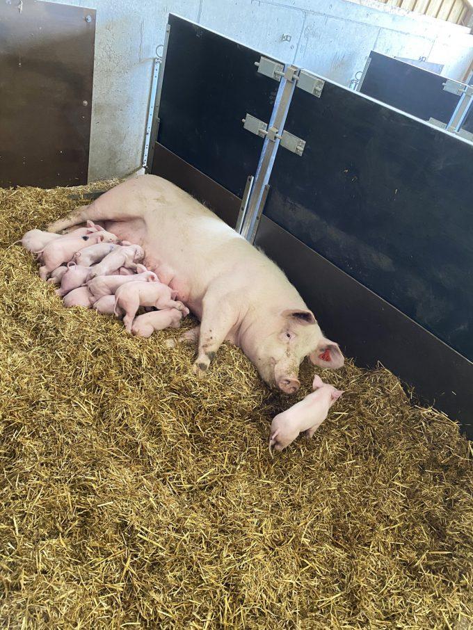 Au Bio Cochon