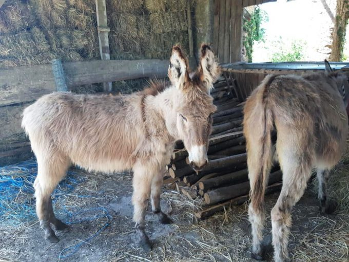 La Bergerie de Flo - ânes