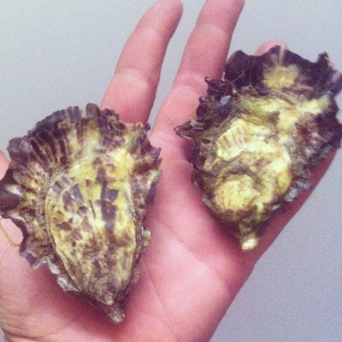 Les Coquillages de l'île de Sein - délicieuses huîtres de l'île de Sein