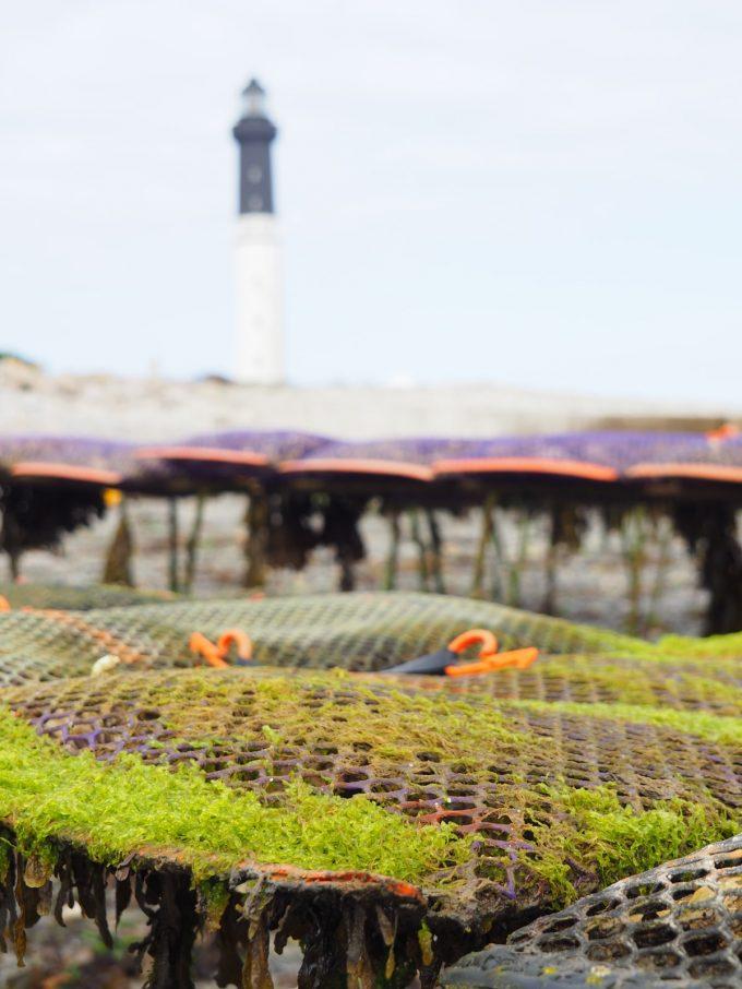 Les Coquillages de l'île de Sein - devant le phare