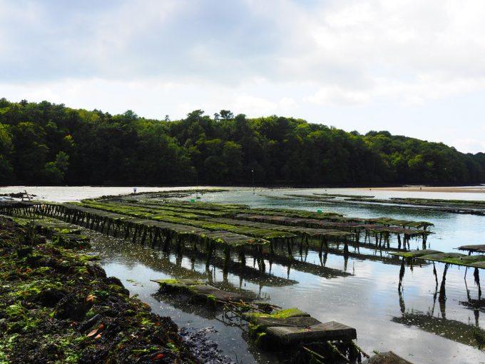 Les Coquillages de l'île de Sein - Riec sur Belon