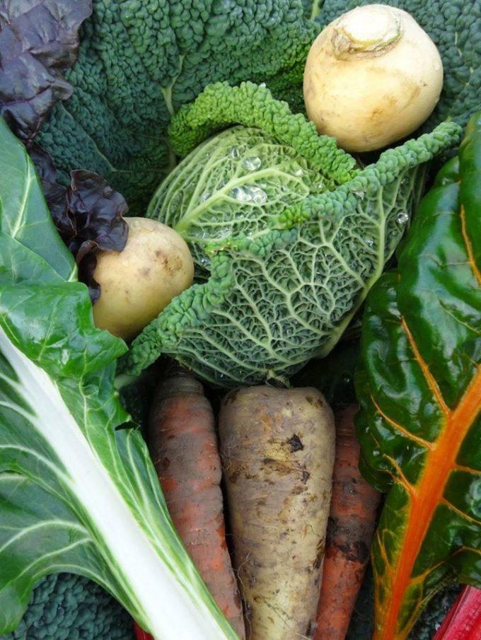 La Ferme de Kerhet - beaux légumes bio
