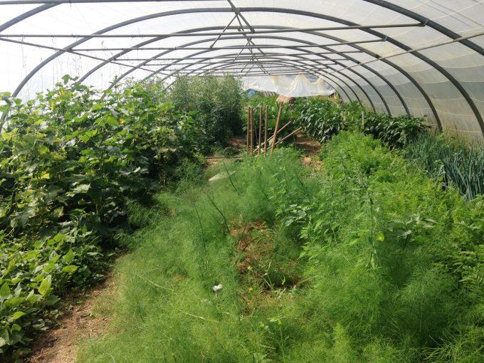 Les Jardins de Beltane - serres