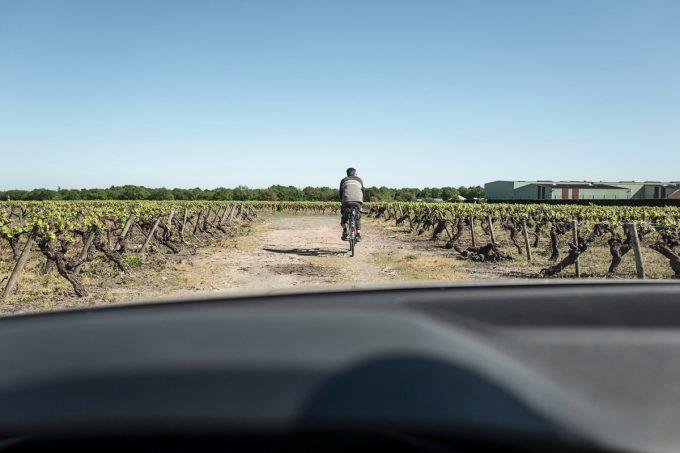 Le Jardin d'Édouard - promenade dans le vignoble