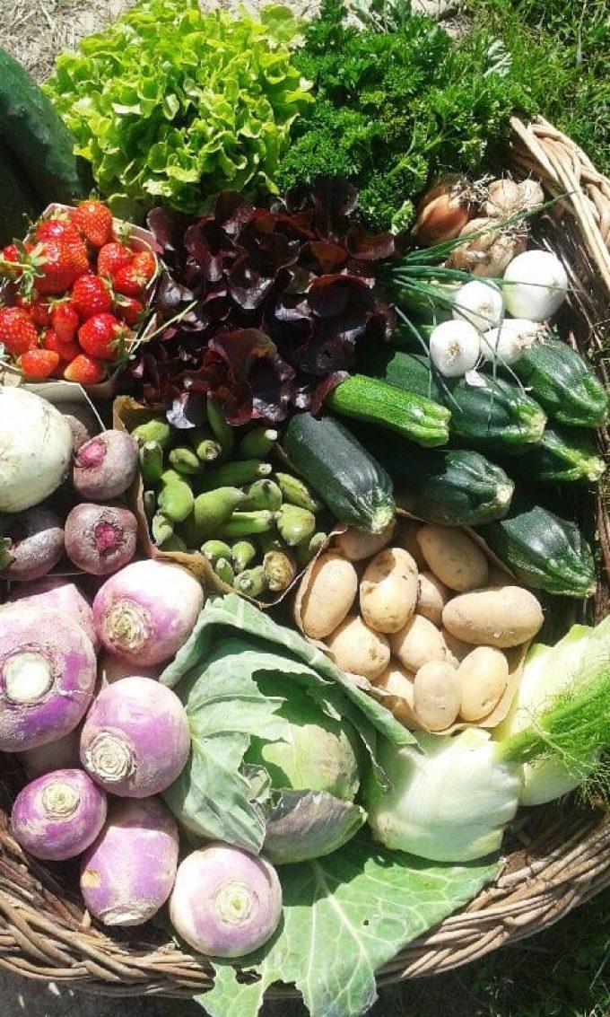Au Jardin de Clarisse - légumes variés