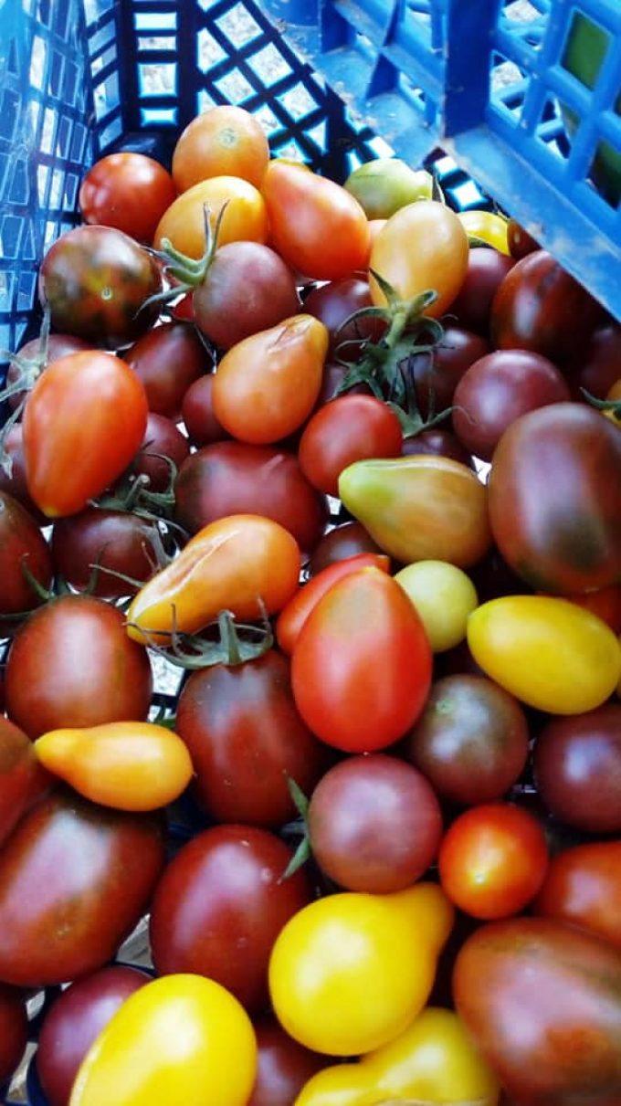 Au Jardin de Clarisse - tomates