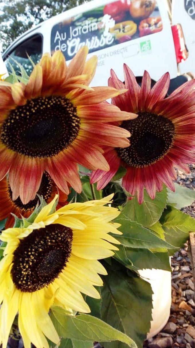 Au Jardin de Clarisse - fleurs