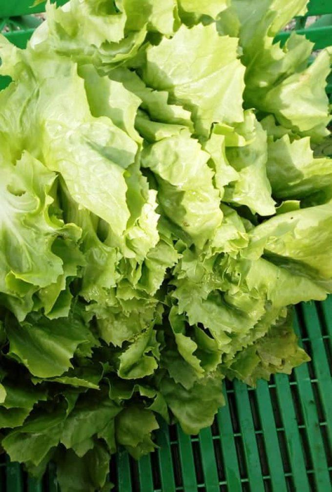Au Jardin de Clarisse - salades