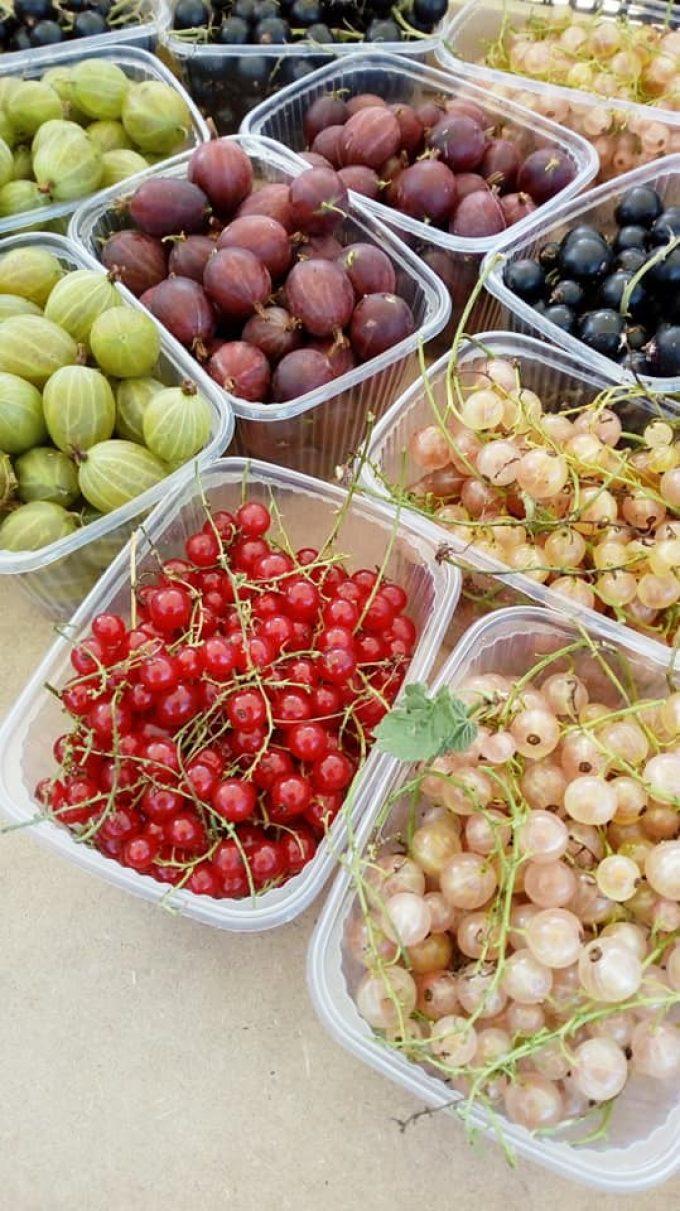 Au Jardin de Clarisse - petits fruits rouges