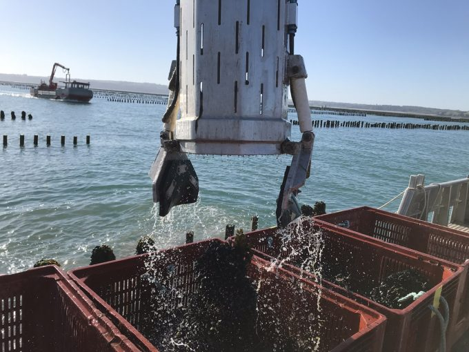 La Marée - récolte des moules