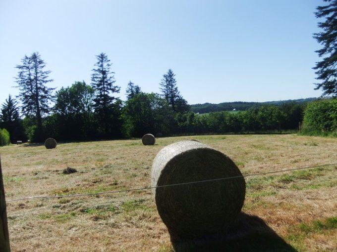 La Petite Ferme de Kerallouant - prairie de foin