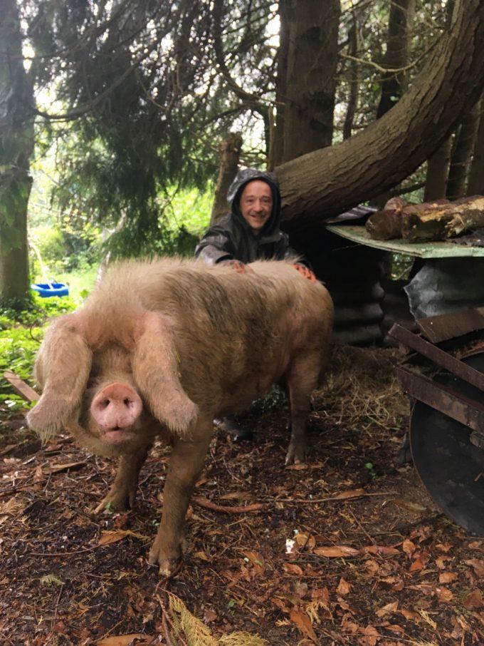 Les Cochons de Porh le Gall - élevé en plein air, même sous la pluie