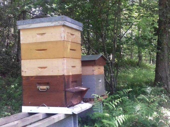 Les Ruchers des Grés - ruches en sous-bois