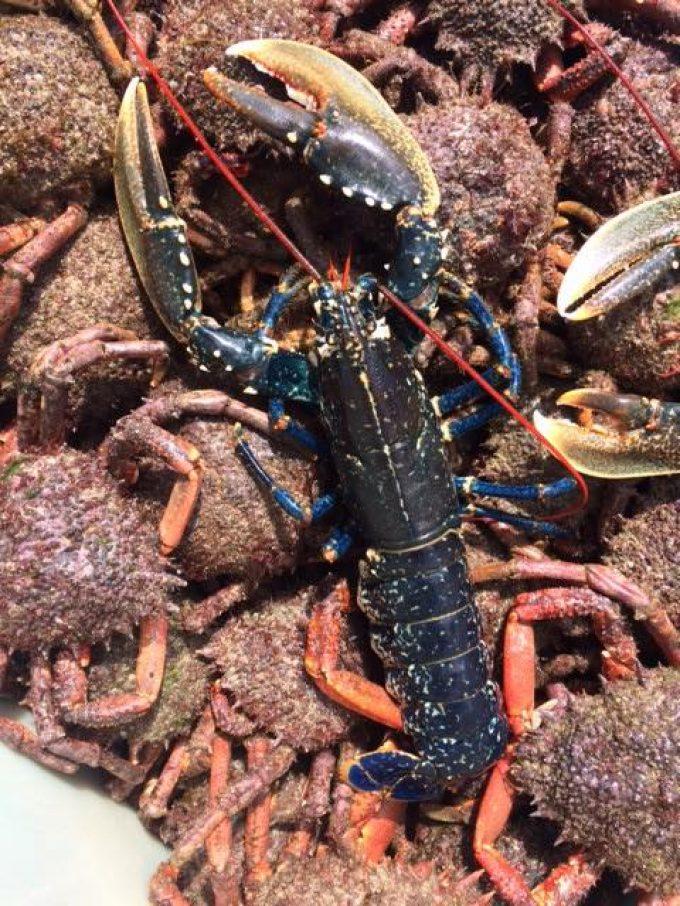 Araignées et homard