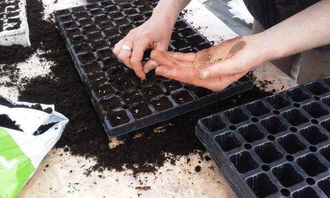 Graines de Saint Germain - semer nos graines