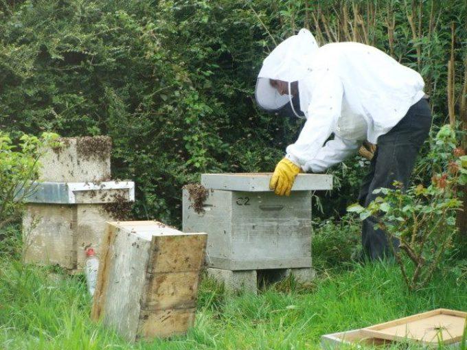 Manipulation des ruches